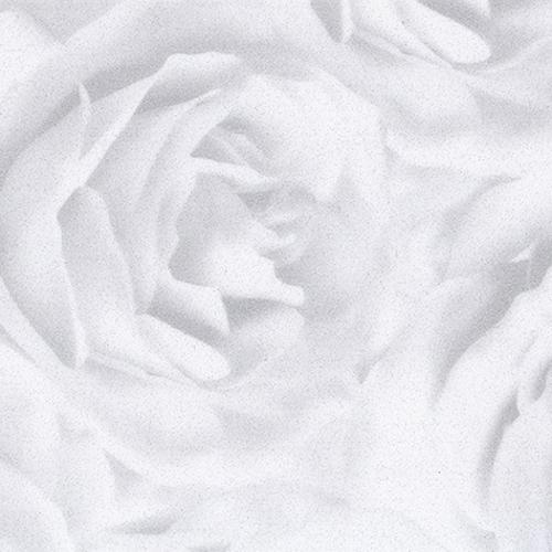 розы фото пленка